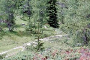 Giro del Monte Toraro - 2 luglio 2017