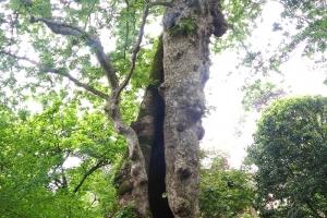 Orto Botanico di Padova - 7 maggio 2017