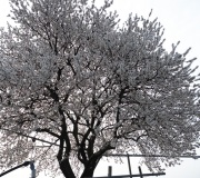 20_02_23-FIABVI_Soave-013